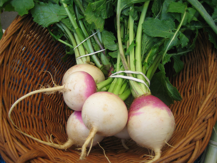 Natural farm grown turnips