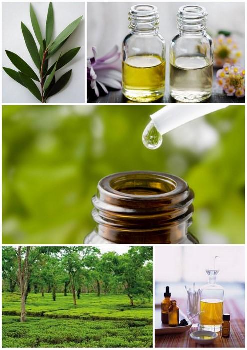TeaTree Oil